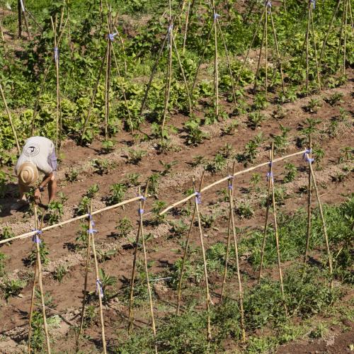 Se abre la convocatoria para la presentación de proyectos agrarios para el Espacio Test Agrario de Sant Vicenç dels Horts